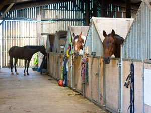 American Barn Stables at Sillaton Farm Stables
