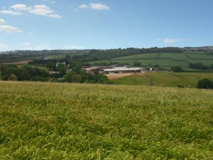 View of Sillaton Farm Stables from the gallops