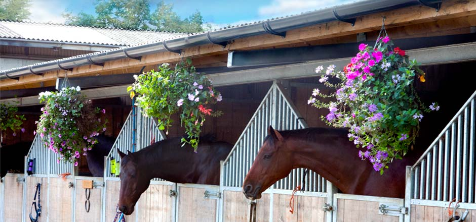 Sillaton Farm Stables - and flowers